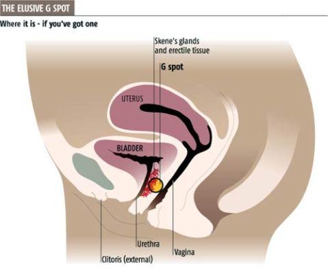 G-Spot (Sumber: www.newscientist.com)